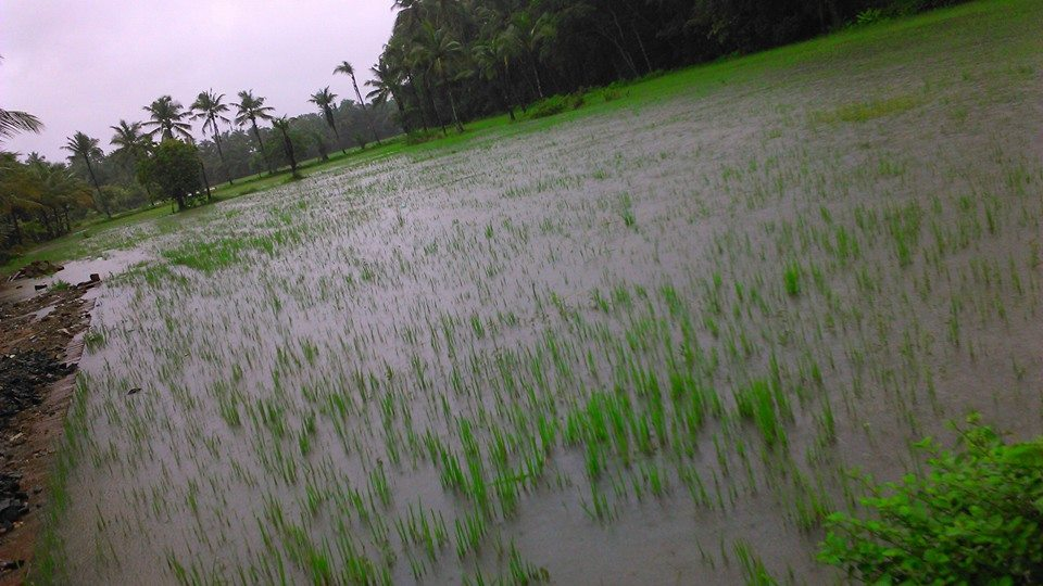 Rain - Kudallur